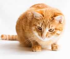 Free Cat Looking Down  On White Stock Photography - 27621092