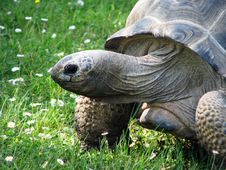 Free Turtle Stock Images - 27624214