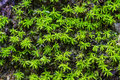 Free Moss On The Rock Royalty Free Stock Image - 27633036