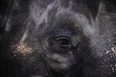 Free Elephant Close Up With Beautiful Black Eye In Thai Royalty Free Stock Images - 27631649