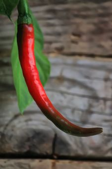 Free Chili Pepper Royalty Free Stock Image - 27634836