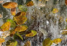 Free Leaves In Ice Stock Photography - 27637222