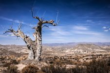 Free Parched Tree In The Desert Landscape Royalty Free Stock Photos - 27638748