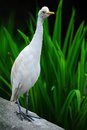 Free White Bird Royalty Free Stock Photo - 27641935