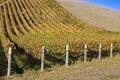 Free Autumn Vineyard Royalty Free Stock Photography - 27645527