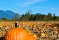 Free Pumpkin Patch Stock Photography - 27646632