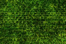 Free Green Grass Texture Royalty Free Stock Images - 27643499