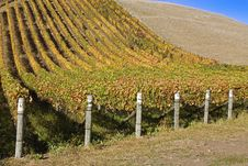 Autumn Vineyard Royalty Free Stock Photography