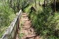 Free Rocky Walkway Karri Forest West Australia Royalty Free Stock Image - 27655106