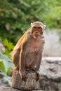 Free Tropical Monkey Stock Photo - 27655430