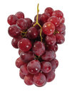 Free Grapes. Isolated Stock Photography - 27659152