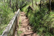 Free Rocky Walkway Karri Forest West Australia Royalty Free Stock Image - 27655106