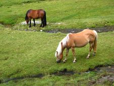 Free Grazing Wild Horses At The Alps Royalty Free Stock Image - 27657396
