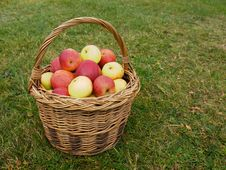 Free Basket Of Apples Stock Images - 27659204