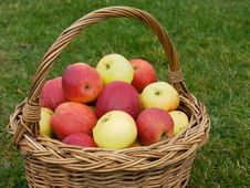 Free Basket Of Apples, Closeup Stock Photos - 27659243