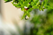 Free Raindrop On Leaf Stock Photos - 27659793