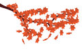 Free Red Maple Leaves Stock Images - 27668974