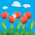 Free Tulip Field Stock Image - 27669011