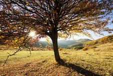 Free Lonely Beautiful Autumn Tree Stock Images - 27664644