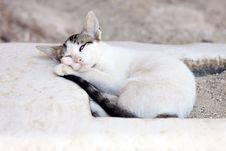 Free Sleeping White Cat Stock Image - 27664721