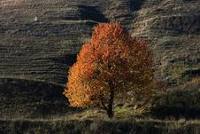 Free Lonely Autumn Tree Stock Photos - 27664753