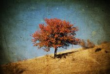Free Lonely Autumn Tree Royalty Free Stock Photos - 27664758