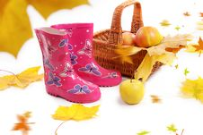 Free Rain Boots, Basket With Apples And Falling Leaves Royalty Free Stock Photography - 27666657