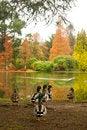 Free Ducks In Autumn Royalty Free Stock Photo - 27670635