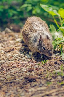 Free Squirrel Looking For Food In The Forest Stock Photos - 27674723