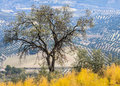Free Olive Tree In A Rural Landscape Stock Image - 27680901