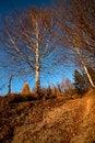 Free Road In Fall Season Royalty Free Stock Photo - 27686225
