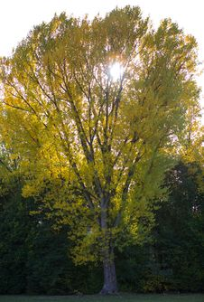 Free Parkland View Stock Image - 27683451