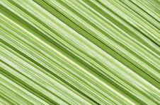 Free Closeup Of Palm Leaf Stock Image - 27685131