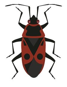 Red Soldier Bug Stock Images