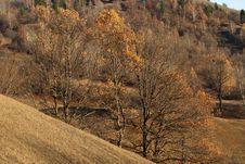Trees In Fall Season Royalty Free Stock Images