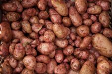 Free Freshly Washed Potato Immediately After The Potato Harvest Stock Photo - 27695500