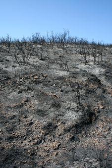 Free Bushfire Remains Royalty Free Stock Photo - 27696205