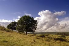 Free Trees On The Hill Stock Photos - 27699673