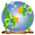 Free Tropical Fish Aquarium Clipart Royalty Free Stock Photos - 2776088