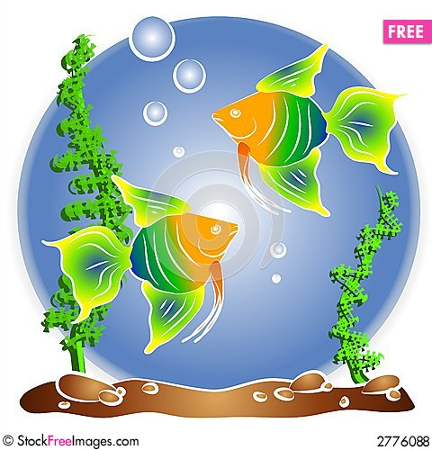 tropical fish aquarium clipart free stock images photos rh stockfreeimages com free stock clipart images free stock illustrations clipart