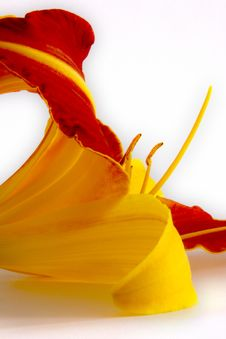 Free Daylily (Hemerocallis) Royalty Free Stock Photography - 2770017
