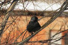 Free Bird Royalty Free Stock Photo - 2772825