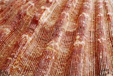 Free Closeup Of A Seashell Stock Photography - 2773752