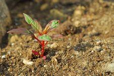 Decorative Plant Stock Photo