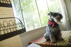 Free Dog Sitting In Window Stock Photography - 2775002
