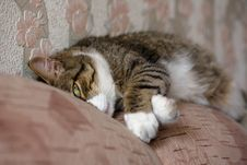 Free Sleeping Cat Royalty Free Stock Photography - 2775147