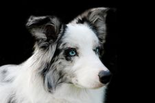 Free Blue On Black Stock Photos - 2775403