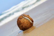 Free Wet Coconut Royalty Free Stock Photos - 2777788