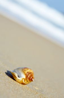 Free Sea Shell Royalty Free Stock Photos - 2777898