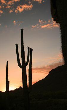Free Saguaro Silhouette 1 Royalty Free Stock Photo - 2778815